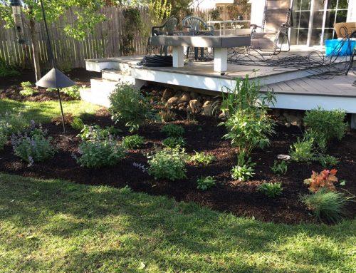 Site Plantings