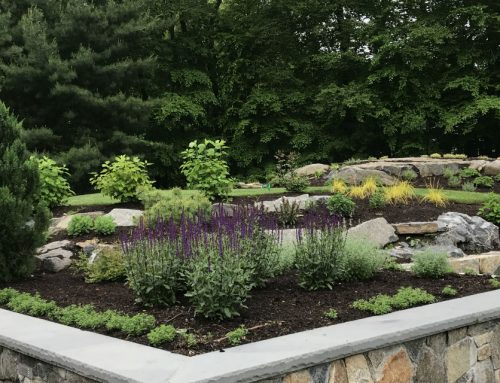 Cos Cob Ledge Plantings